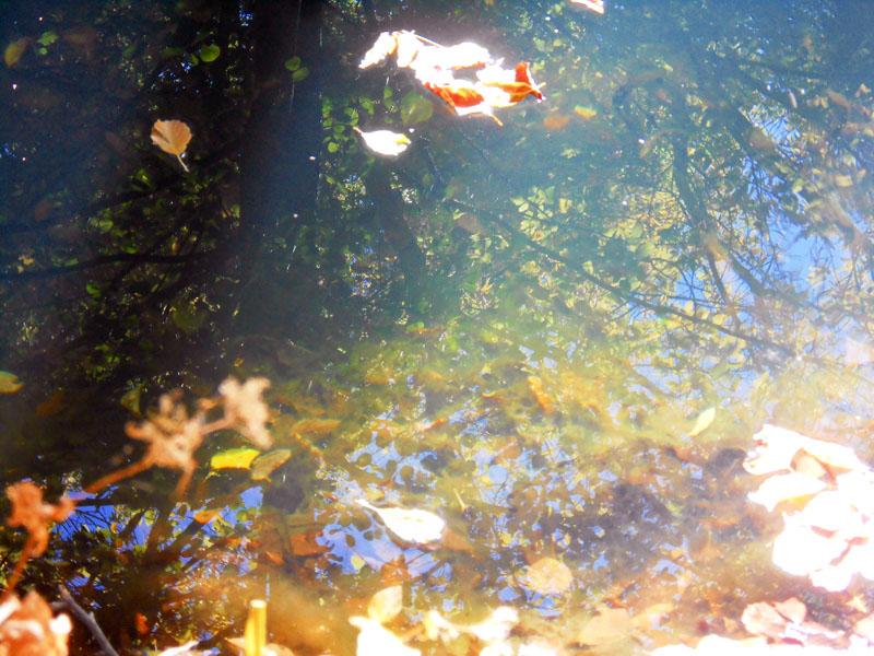 Осенняя мелодия старинной речушки.